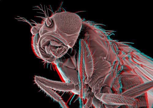 Fruitfly 3D 4