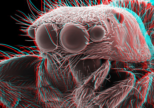 Jumping Spider 3D 4