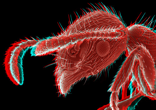 Red Ant 3D 2