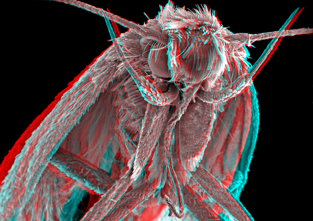 Moth 3D 3