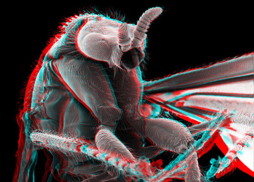 March Fly 3D 5