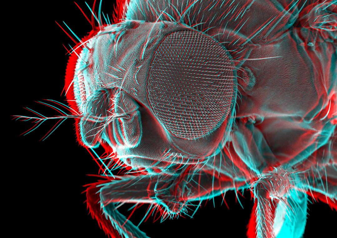Fruitfly 3D 1