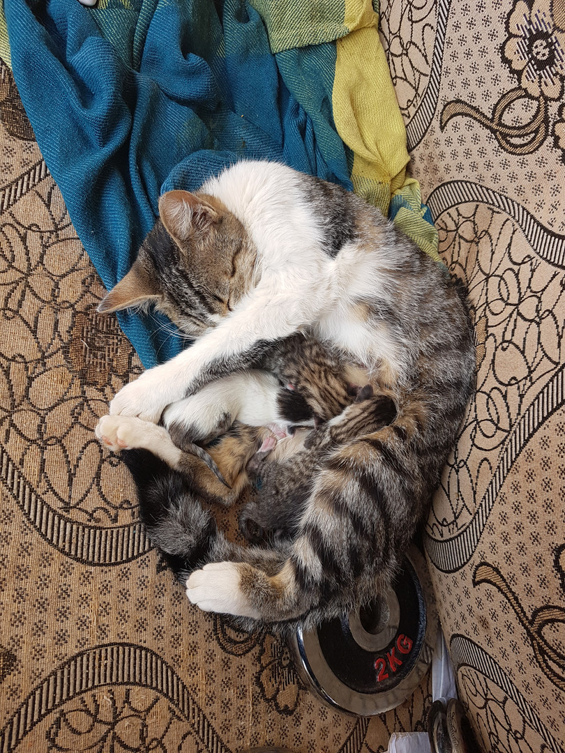 Süße Susann mit Babys