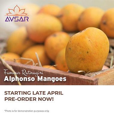 India's famous Ratnagiri Hafus Mangoes in Mississauga