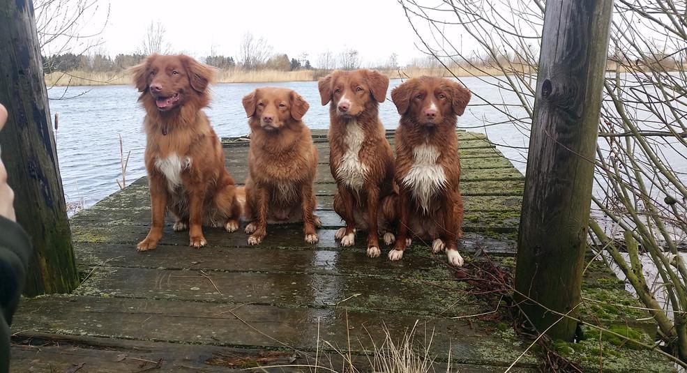 Cody, Barbe, Cona, Saya