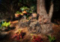 secret garden.jpg