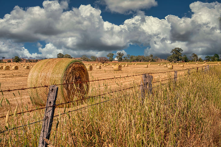 hay harvest (1 of 1).jpg
