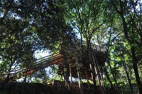 La cabane Canopée