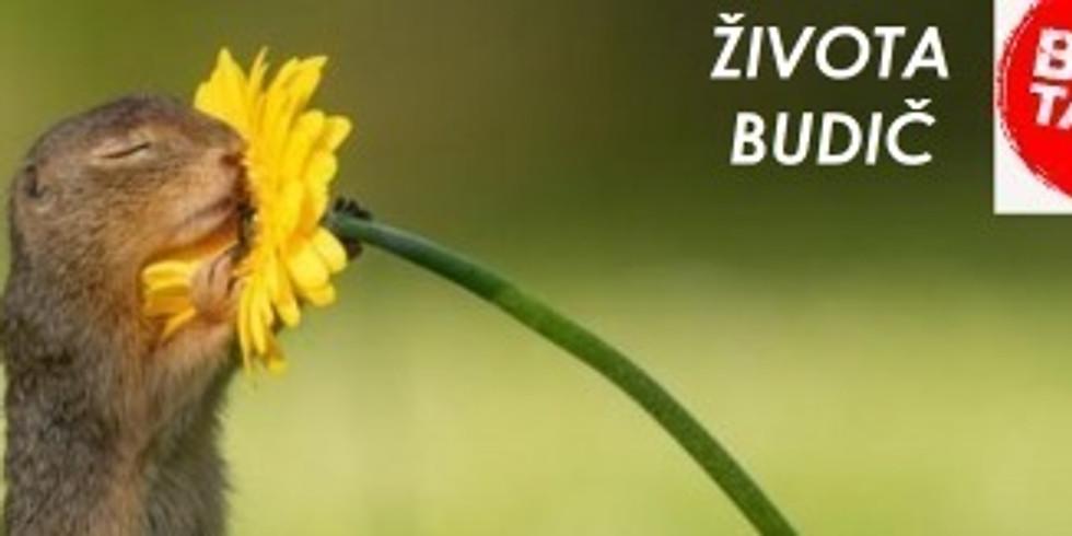 ŽivotaBudič - BEST TASTE