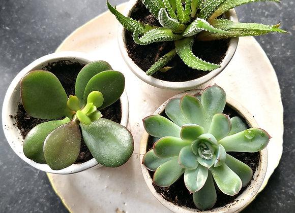 Petit pot et plante