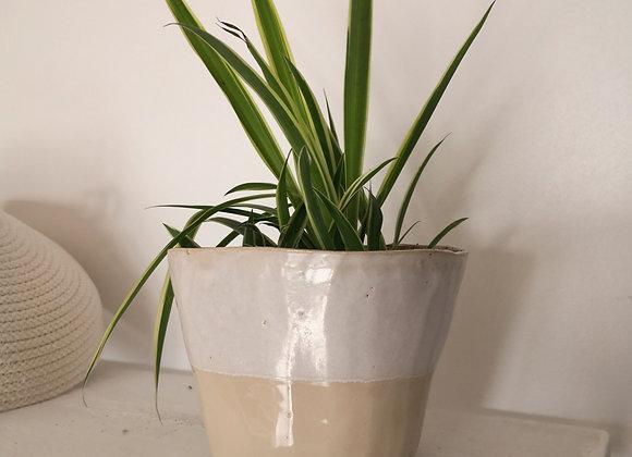 Pot et Chlorophytum comosum