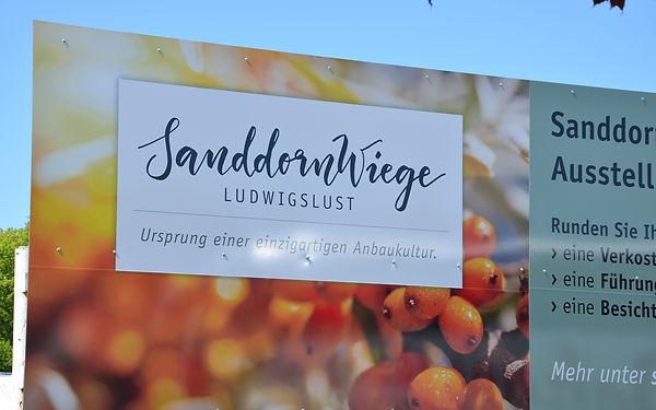 Sanddorn_Web_02.jpg
