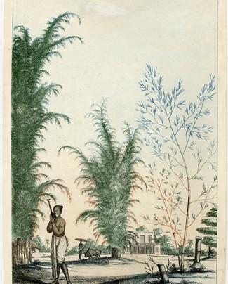 Bambou.jpg