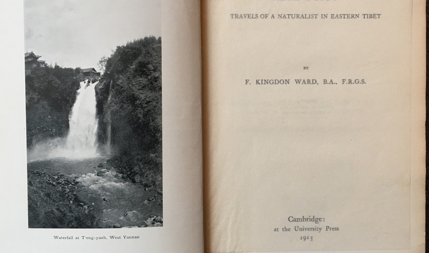 Francis Kingdon-Ward (1885-1958), was an English botanist, explorer, plant collector and author. He carried out 25 expeditions over fifty years exploring Tibet, North Western China, Myanmar and Assam. Many of the areas that he visited were experiencing civil unrest at the time, and were somewhat dangerous.