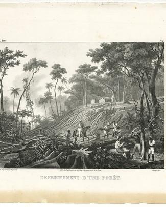 Defrichement_d'un_forêt.jpg