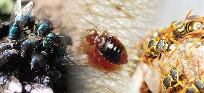 Pest Control Moonta Bay, Pest Control Port Pirie, Pest Control Clare, Pest Control Kadina, Pest Control Burra, Pest Control Balaklava, Pest Control Jamestown, Pest Control Laura