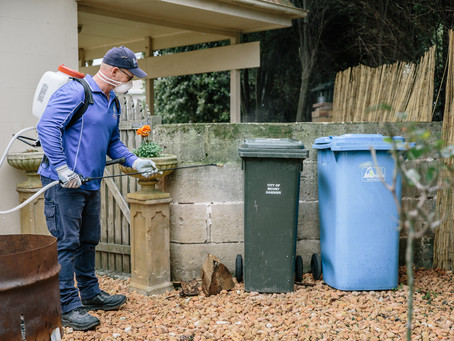 When's the best time of year for a pest control treatment?