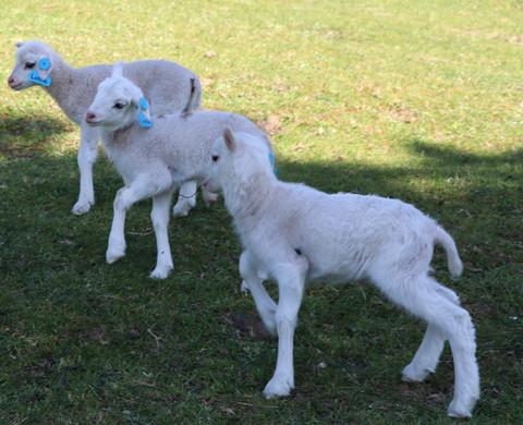 Lottie, Layla and Len 2019 Finnish Landr