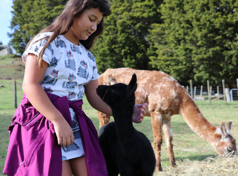 Lorna May with  Llama Diamond Harbour an