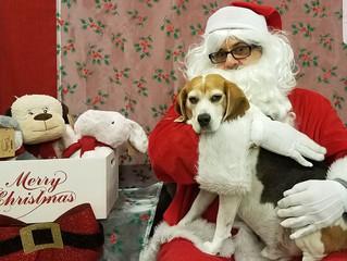 Merry Christmas DreamStarters!