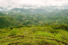 ecuador real estate, real estate in ecuador, cheap investments, fertile land, invest in water, abundant   abundant water, invest in farmland, south american real estate, cheap farmland, best farmland, land ecuador   land in ecuador, real estate bargains