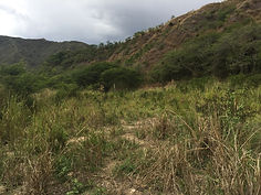 land in vilcabamba for sale- real estate