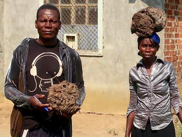 Farming Ant dung.jpg