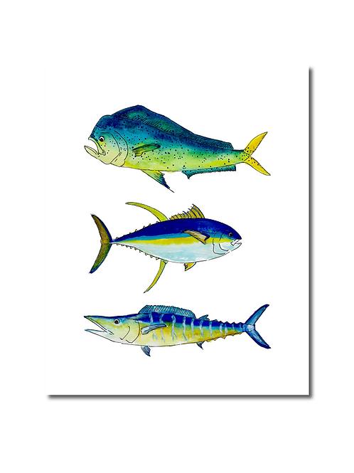 Saltwater Fish Print