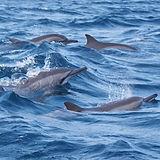 dolphins ksl.jpg