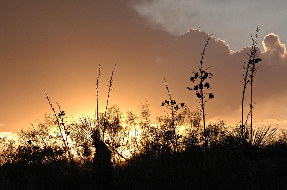 Mesa Vista sundown.jpg