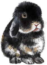 Black Otter Holland Lop- offset front vi