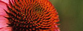 Phytotherapie / Pflanzenheilkunde / Klassische Massage