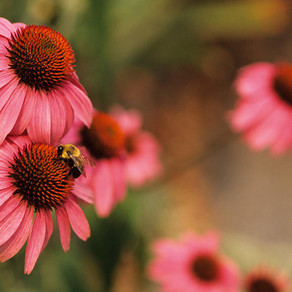 Viral Illnesses + Herbal Medicine