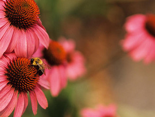 Pollinators Are Our Friends - How YOU can help them