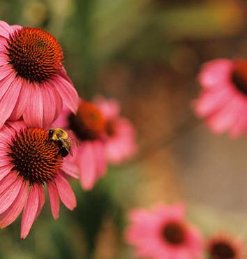 Worauf Bienen fliegen
