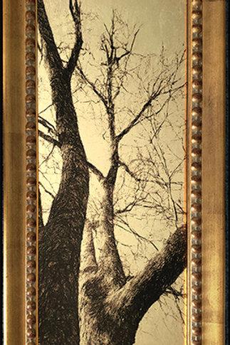 Gilded Light- Julian Tree