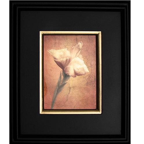 Gilded Light-Fleur