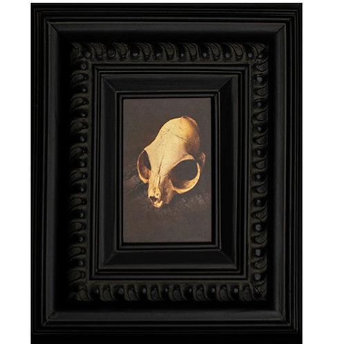 Gilded Light- Cat Skull