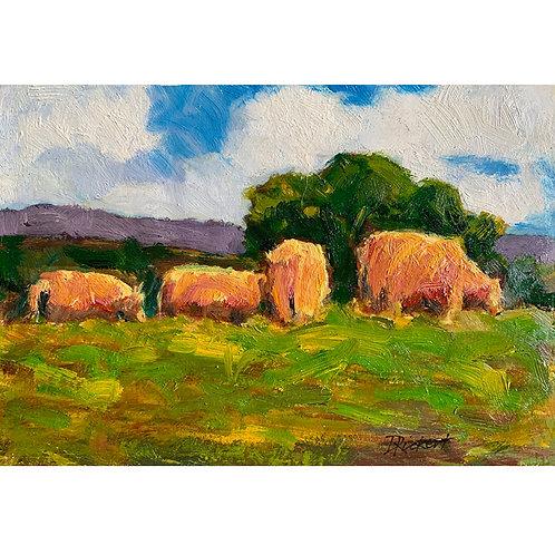 Laporte Cows
