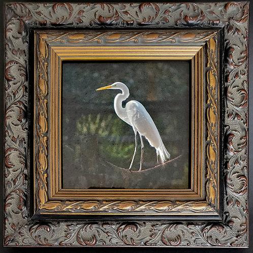 Gilded Light-Egret