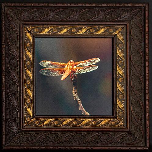 Gilded Light- Dragonfly