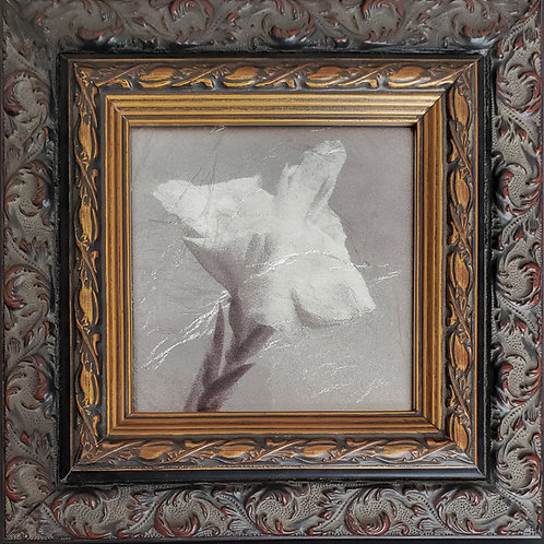 Gilded Light- Fleur d'Argent