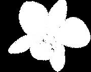 blossomlogoflowerwhite.png