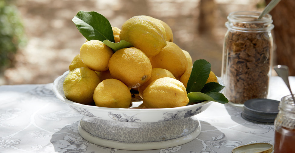 Lemons from the Guesthouse Garden