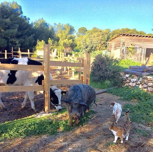 vrouva farm farm life