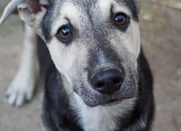Βοηθήστε μας να φροντίσουμε ένα διασωσμένο σκύλο