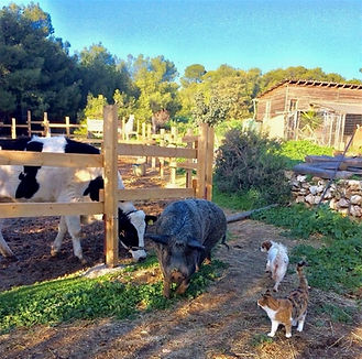 rescue farm animals and dog and cats live happily together at vrouva farm