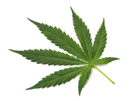 Cannabis: Interdictions légales pouvant concerner les logements.