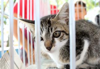 Feira de adoção de animais  acontece no fim de semana em Atibaia.