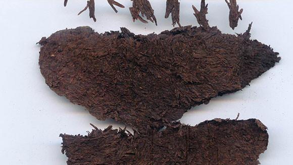 oldest tea ever found